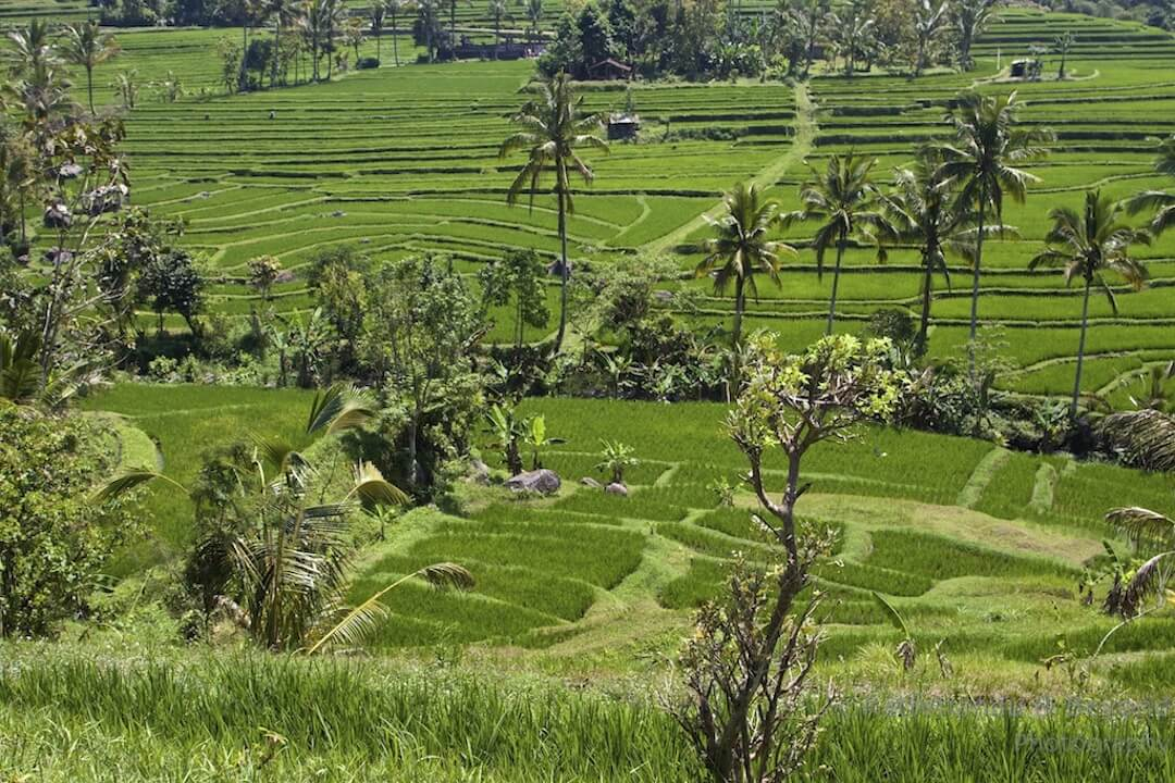 A Guide to Visiting Jatiluwih Rice Terraces in Bali, Indonesia