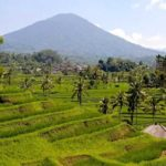 Visiting Jatiluwih Rice Terraces in Bali, Indonesia