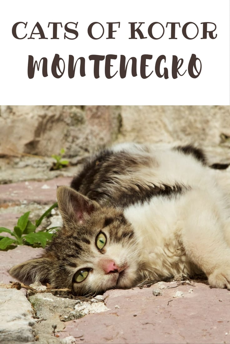 Kotor Kitties - Where are there so many cats in Kotor, Montenegro_ #travel #balkans #animalwelfare #catlover