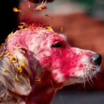 Kukur Tihar: the Nepalese Festival that Celebrates Man's Best Friend
