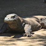 Komodo National Park: Dragons and Islands