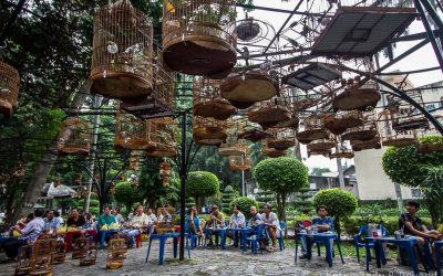 Travel Shot | Bird Cafe in Tao Dan Park, Saigon
