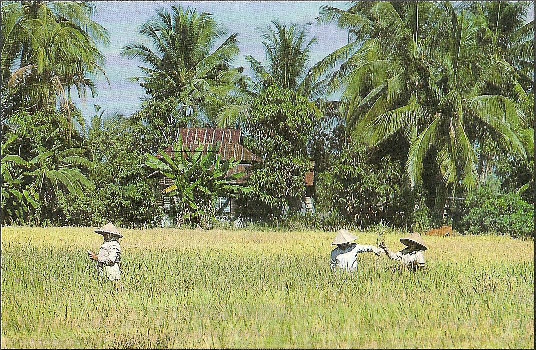 Postcard from Penang 8th April 1992