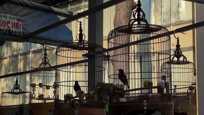 Birdsong at Saigon Bird Cafe in Ho Chi Minh, Vietnam