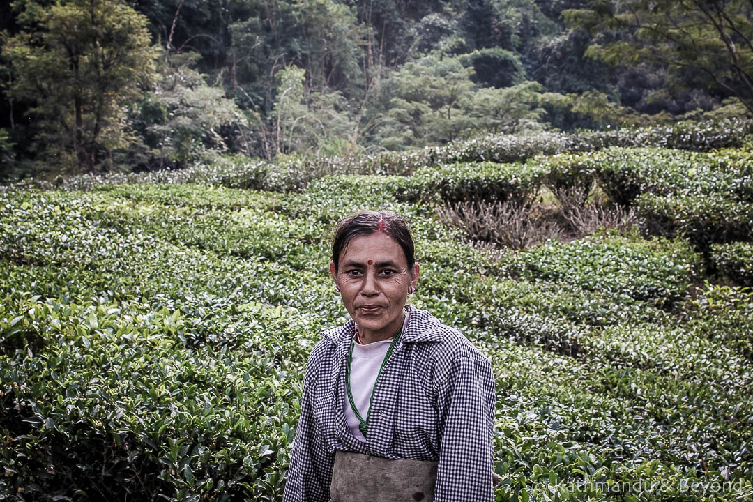 Glenburn Tea Estate Darjeeling India 3