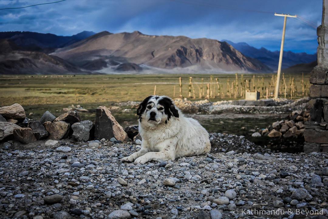 Tingri Tibet