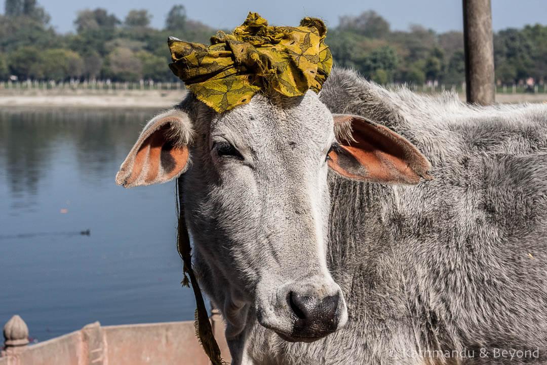 Mathura India (3)