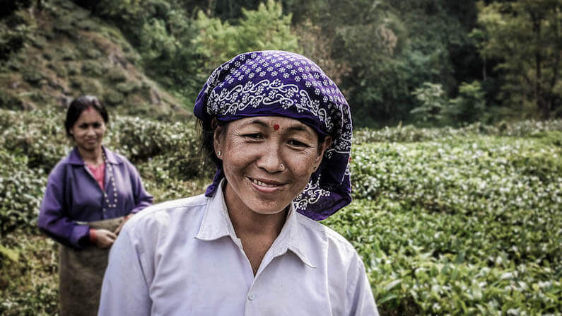 Travel Shot: Tea pickers near Darjeeling in India