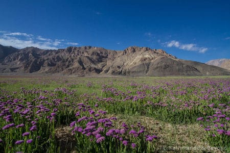 Travel Blog with posts featuring Tajikistan
