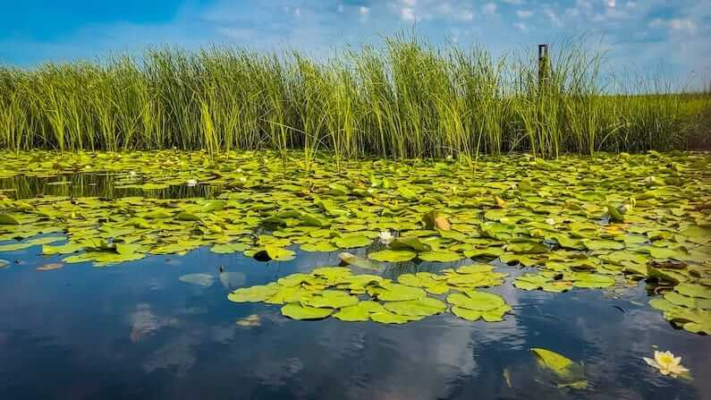 Visiting the Danube Delta in Romania